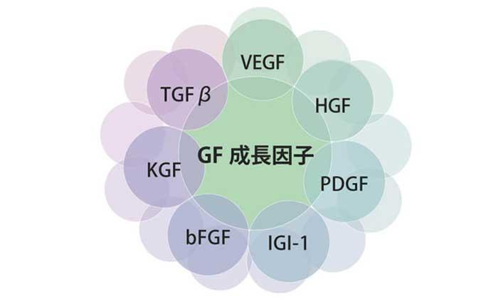 成長因子(グロースファクター)